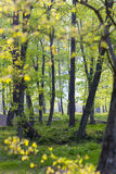 Backlit Forest. Leafy forest in early spring, shallow depth of field Royalty Free Stock Images
