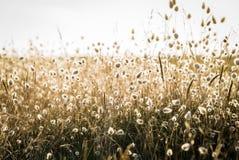 Backlit gras bij het strand Royalty-vrije Stock Foto