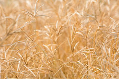 Backlit grass flower field Royalty Free Stock Images