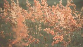 Backlit grass flower Stock Photography