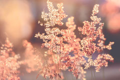 Backlit grass flower Royalty Free Stock Photography