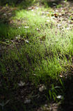 Backlit grass shoots Stock Photo