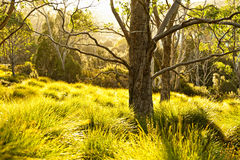 Backlit grass and trees by the sun Royalty Free Stock Photo