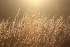 Backlit grass Royalty Free Stock Images