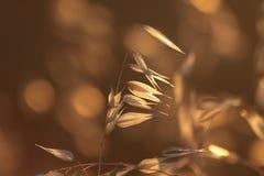 Free Backlit Grasses Stock Photo - 15158640