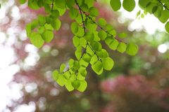 Backlit green leaves Stock Photos