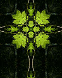 Backlit green leaves cross. Kaleidoscope cross from photo of backlit green leaves in Oregon forest Stock Images