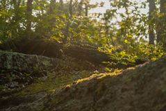 Backlit hillside downed tree late afternoon royalty free stock photo