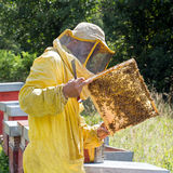 Backlit honeycomb with bees. Apiculture, square crop. Royalty Free Stock Photography