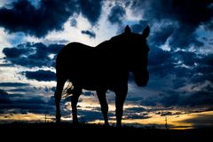 Backlit horse at sunset Royalty Free Stock Photography