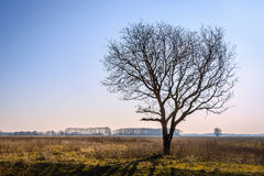 Backlit image of a lone tree in an empty landscape Royalty Free Stock Photos