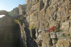 Backlit image of plants growing on castle walls