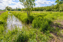Backlit image of a small stream in a Dutch polder landscape Royalty Free Stock Photos