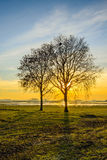 Backlit image of the sun setting behind bare trees. Backlit image of two bare trees with whimsically shaped branches in a wide Dutch nature reserve. The sun sets Royalty Free Stock Photography
