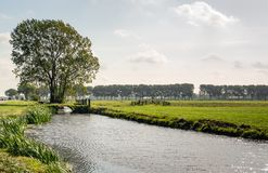 Backlit image of a typical Dutch polder landscape. In the background is a large tree and a small bridge over the water. Wooden gates and fences are visible in royalty free stock photo