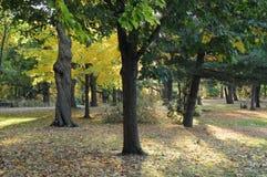 Backlit jesieni drzewa z wiewiórką Zdjęcia Royalty Free