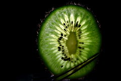 Backlit kiwi Fotografia Stock