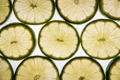 Backlit lime slices Royalty Free Stock Photo