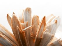 Backlit macro shot photo of a dried fake colored paper flower. Backlit macro shot photo of a dried colored paper flower stock photos