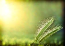 Backlit ochtenddauw op aren royalty-vrije stock afbeeldingen