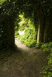 Backlit old arch overgrown in woodland. Royalty Free Stock Photos