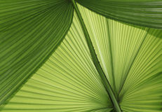 Backlit Palm Fronds Background Royalty Free Stock Photography