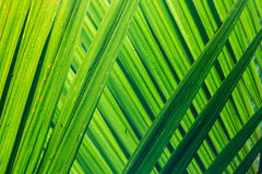 Backlit palm fronds with rain drops Royalty Free Stock Image