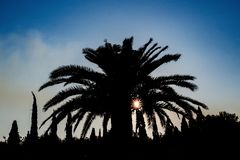 Backlit palm tree in Greece stock photo
