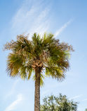 Backlit Palm Tree Stock Photo