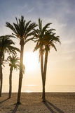 Backlit palm trees at a beach. Some palm trees at a beach in Spain which are backlit from a wonderful colorful sunset over the Mediterranean Sea Royalty Free Stock Photography