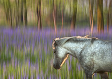 Backlit pony walking through bluebell forest Stock Photo