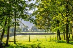 Backlit rural English scene Stock Photography
