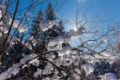 Backlit scene of snow on branches. Stock Photos