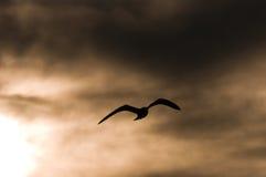 Backlit, Serene Sea Bird Royalty Free Stock Photos