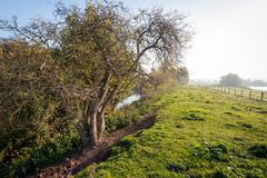 Backlit shot of an irregularly shaped tree at the foot of a Dutc. H in the early morning sunlight. A long fence of gauze and wooden poles is along the dyke. The royalty free stock photos