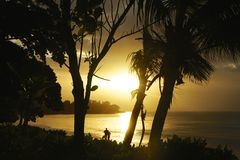 Backlit Silhouette by trees on the beach in the Seychelles in landscape mode Stock Images