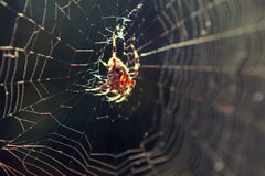Backlit Spider in Web Stock Photo