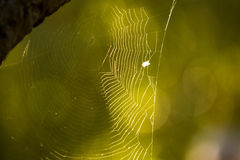 Backlit spiderweb. With blurry background Stock Photo