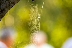 Backlit spiderweb Stock Images