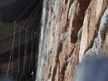 Backlit spiderweb Stock Photo