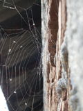 Backlit spiderweb Royalty Free Stock Photo