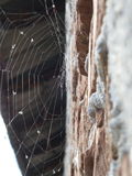 Backlit spiderweb Stock Photography