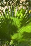 Backlit street palm leaf. At a stree cafe in Greece Royalty Free Stock Photography