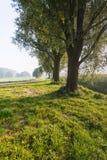 Backlit strzał trzy drzewa w poboczu Obraz Royalty Free
