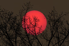 Backlit takken bij zonsondergang Stock Foto