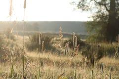 Backlit trawy w Uroczystym Tetons obrazy stock