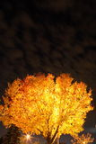 Backlit tree. A backlit autumn tree under an eerie backlit sky Royalty Free Stock Photos