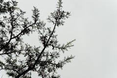 Backlit tree branch Stock Images