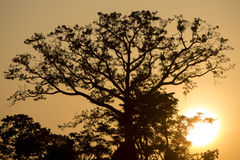 Backlit of tree on the Catatumbo River near the Maracaibo Lake. Royalty Free Stock Images