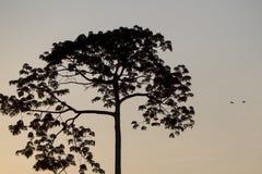 Backlit of tree on the Catatumbo River near the Maracaibo Lake. Royalty Free Stock Image